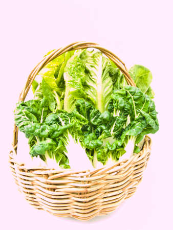 Fresh  baby bok choy and cos salad in ratten basket isolated on white background Stock Photo - 17879782