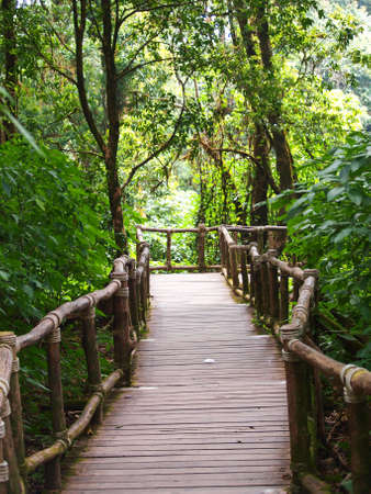 Wood path way among the forest in Doi Inthanon in Chiang Mai, Thailand photo