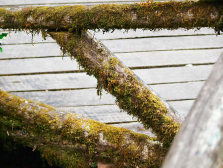 Lichen on wooden fence