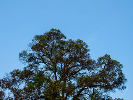 branched: Tree branched on blue sky