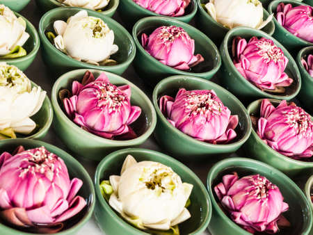hindu gods: Thai traditional  folded white and pink lotus  in small green ceramic bowls for paying homage to hindu gods Stock Photo