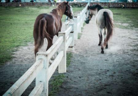 gelding: blured walking horses in farm Stock Photo