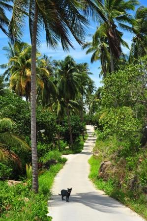 koh tao: Passage through the paradise, Koh Tao, Thailand