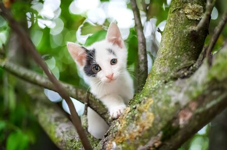 kitten small white: Cute little kitten on the tree in garden  Cat climbing the tree Stock Photo
