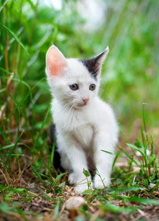 face in tree bark: Cute little kitten in the garden. Little cat in spring garden Stock Photo