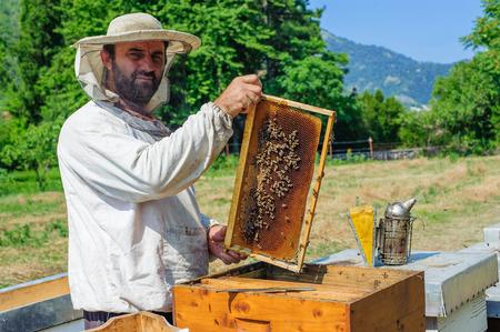 beekeeper: Beekeeper on apiary. Beekeeper pulling frame from the hive