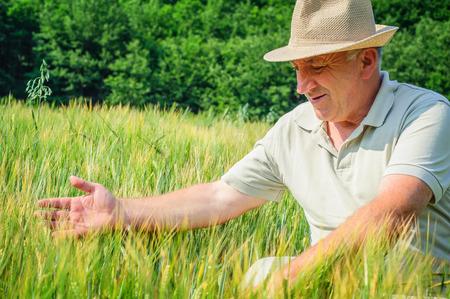 avena: Hombre sentado en el campo de trigo con los brazos extendidos. al aire libre viejo granjero en el campo de trigo