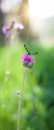 Close up of beautiful butterfly landing on spring flower. Selective focus Stock Photo