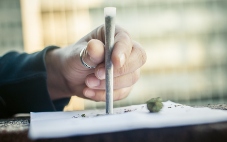 Preparing marihuana drug cigar. Rolling cannabis into paper with filter. Close up
