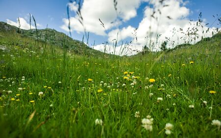 Wind blowing through flower grass at the top of mountains. Beautiful natural landscape in the summer time