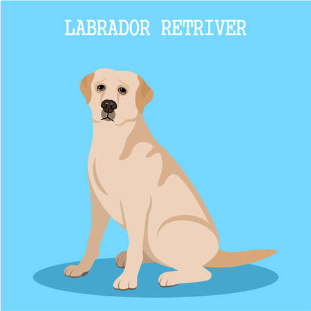 obedient: Labrador retriever on a blue background. Vector