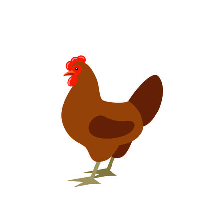 Cartoon chicken. Farmer isolated bird. Vector
