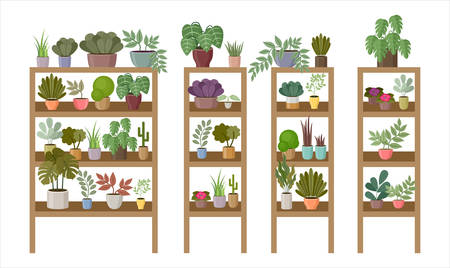 Shelves and racks with home plants and flowers. Vector illustration Çizim