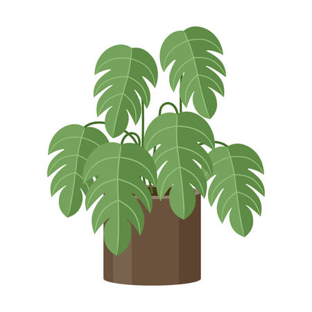 Plant in pot on white background. Vector illustration