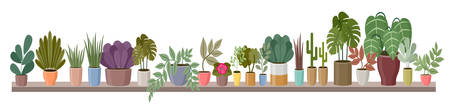 Shelf with home plants is long. Vector illustration
