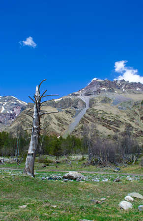 dried up: lonely dried up tree on a background of mountains Stock Photo