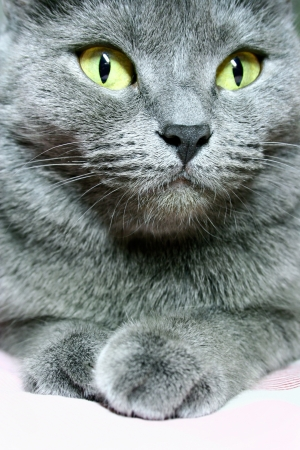 gray cat close up photo