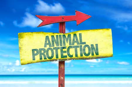 animal cruelty: Animal Protection sign with arrow on beach background Stock Photo