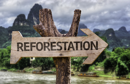Wooden sign board in wetland with text: Reforestation