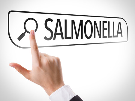 salmonella: Hand searching online on white background with text: Salmonella Stock Photo