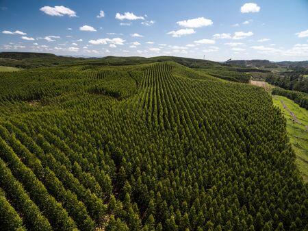 Aerial view of Eucalyptus Forest, Sao Paulo, Brazil