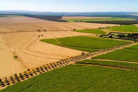 Sugar Cane Field in Brazilië Stockfoto - 83973124