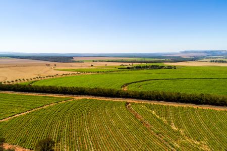 ブラジルのサトウキビ畑