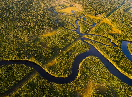 Amazon Rainforest w Brazylii Zdjęcie Seryjne