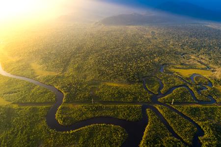 ブラジルのアマゾンの熱帯雨林 写真素材