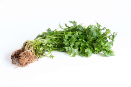 Coriander leaves isolated on white background. Space copy