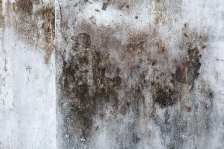 Mold, Fungus, and White Peeling Painting on Old Concrete Wall Background. Suitable for Presentation and Backdrop.