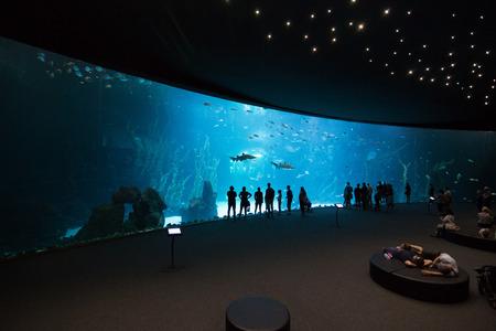 Las Palmas de Gran Canaria, Spain - December 28 2018: Visitors enjoy beautiful view of marine life in the biggest tank in Europe of new Aquarium Poema del Mar