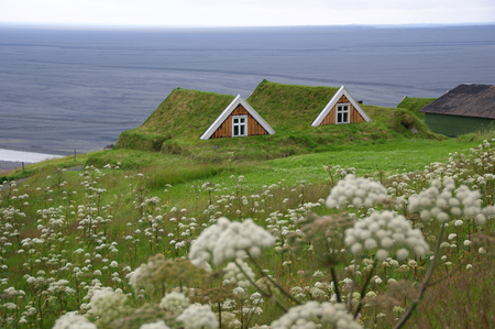 Icelandic traditional house covered with grass, in southern Iceland.