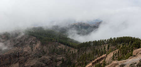 Panoramic view of the mountains of Gran Canaria, Spain, with low clouds between pine forest. Nature concept