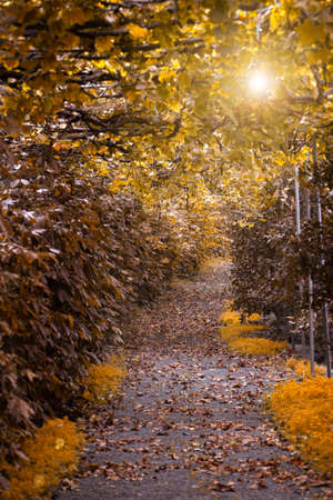 Corridor in a garden in autumn with fallen leaves and yellow and brown vegetation. Autumn concept Standard-Bild