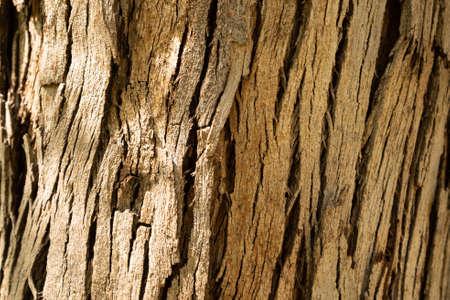 Tree bark texture background. Nature concept Standard-Bild