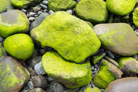 Big pebble stones with moss on seashore. Background concept Standard-Bild
