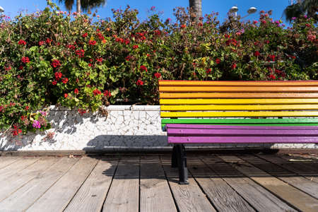 Rainbow colored bench with floral background and a palm tree in background in a wooden walkway in the city in Valencia, Spain. Pride day concept