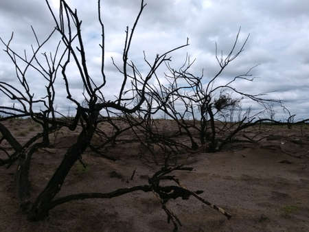 Burned bushes in desert area, on sandy ground, little vegetation, day with clouds in the desi Stock Photo