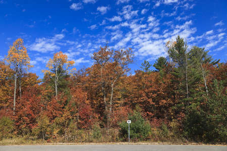 Fall trees displaying a wide variety of colors from green to red leaves on the side of a road in Ontario, Canada.