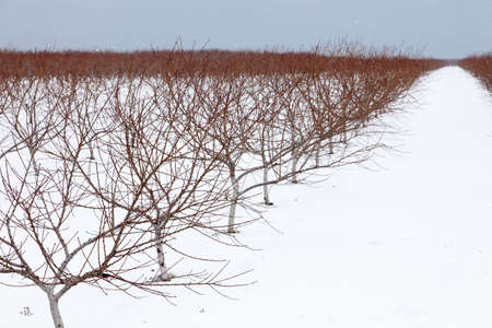 Southern Ontario vineyard on a cold snowy winter morning Stock Photo