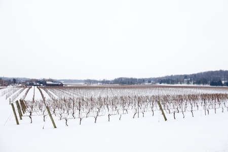 One of the dozens of wineries in the region of Beamsville, Southern Ontario, seen in the winter when the grapes have already been harvested and snow covers the ground. Some wineries wait until this time of the year to harvest and produce Canada