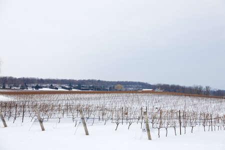 vineyard plain: Cold winter morning in a Beamsville vineyard, Southern Ontario, Canada. Stock Photo
