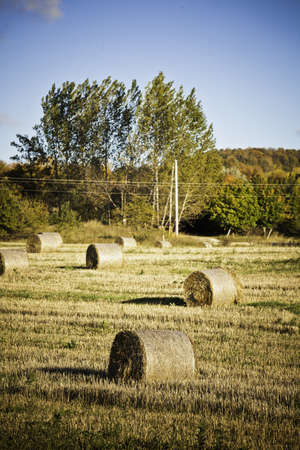 Hay Bales Stock Photo - 11499699