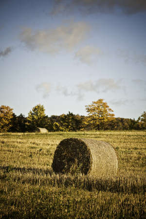 Hay Bales Stock Photo - 11499688