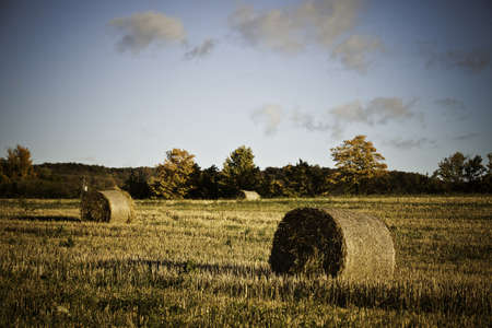 Hay Bales Stock Photo - 11499691