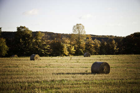 Hay Bales Stock Photo - 11499694