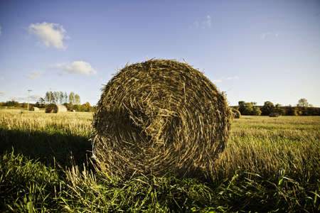 Hay Bales Stock Photo - 11499700