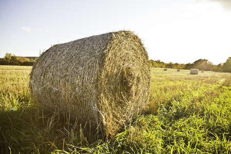 Hay Bales Stock Photo - 11499697