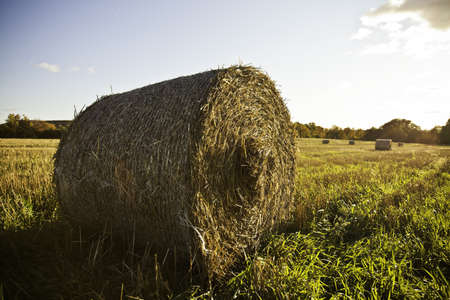 Hay Bales Stock Photo - 11499693